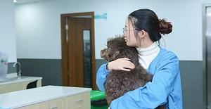 猫狗什么时候做绝育手术合适?