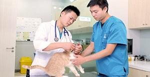 猫狗绝育手术护理