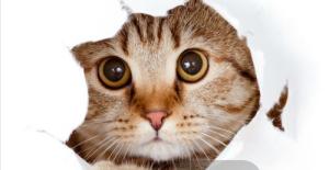 猫感冒打喷嚏会传染给人吗图片