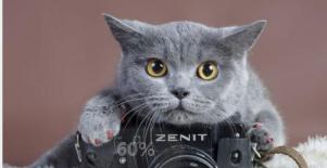 北京波斯猫什么时候做绝育手术合适!_田园猫公猫什么时候绝育