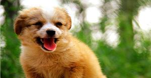 狗狗感冒了吃什么药