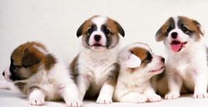 狗狗感冒有什么状态,应该吃什么药?