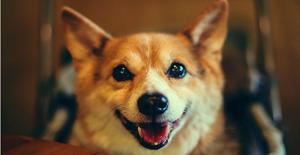 如何在家里治疗狗狗感冒